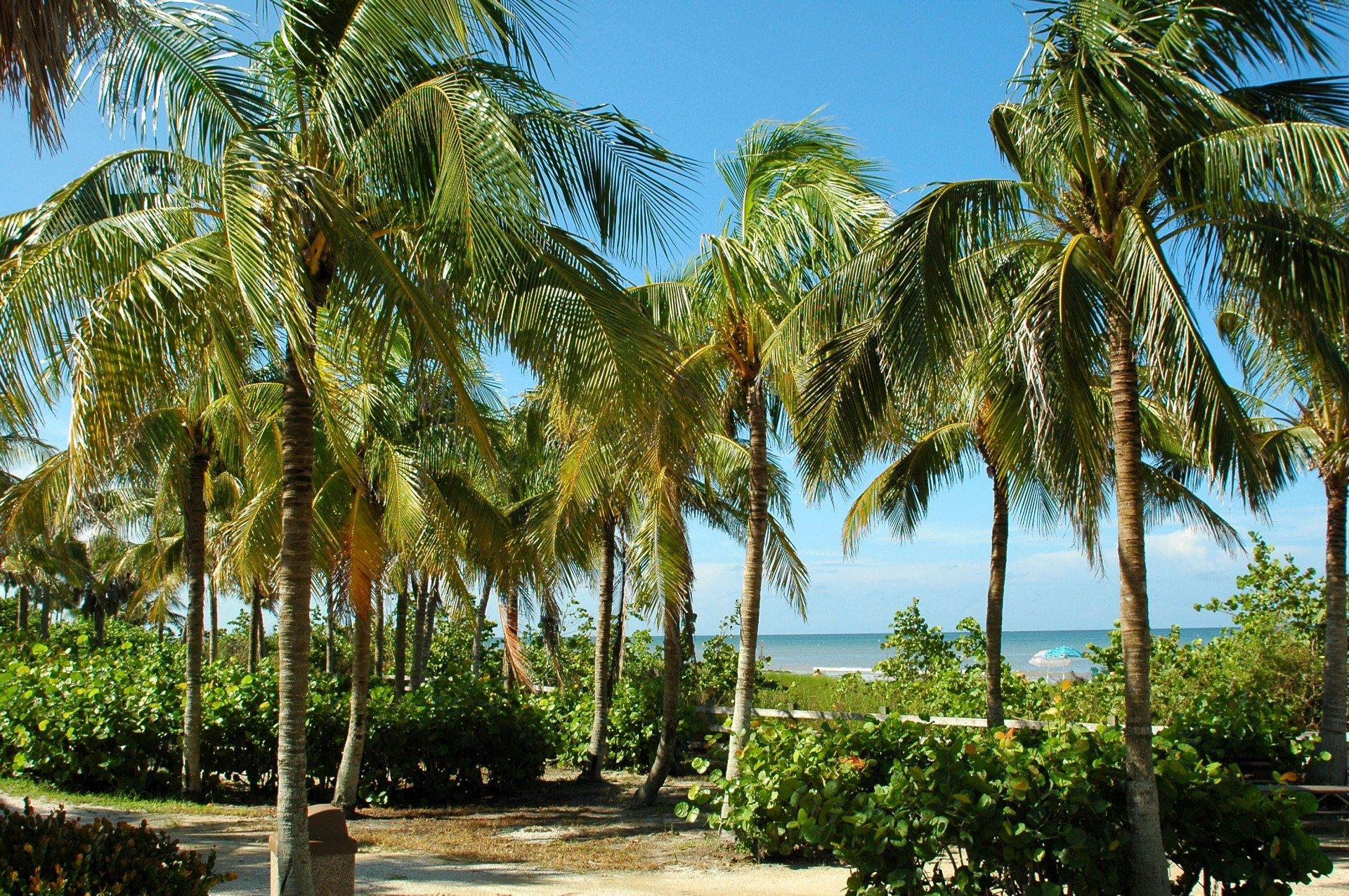 Barbados tropical beach