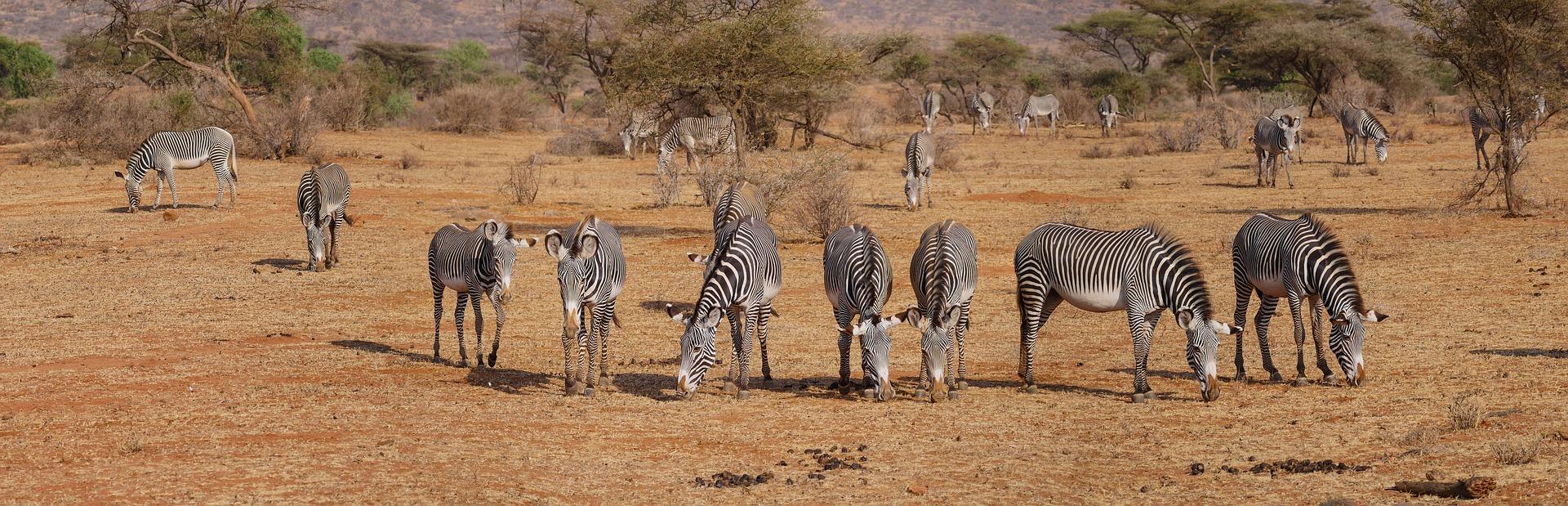 tours to kenya
