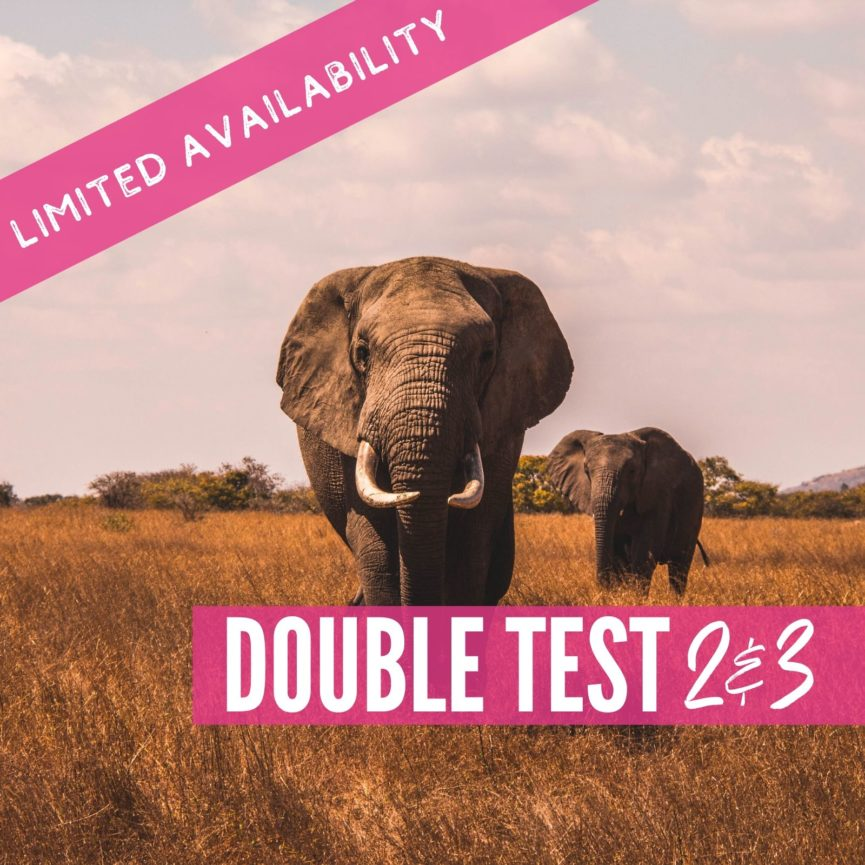 Double Test 2 and 3 2021 Lions package