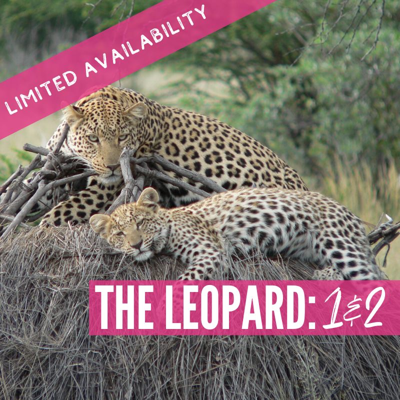 Double Test 1 and 2: The Leopard Lions 2021 Tour package