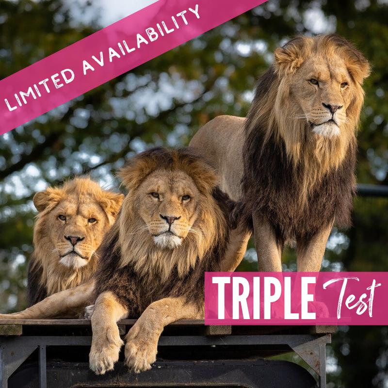 Triple Test Lions 2021 package