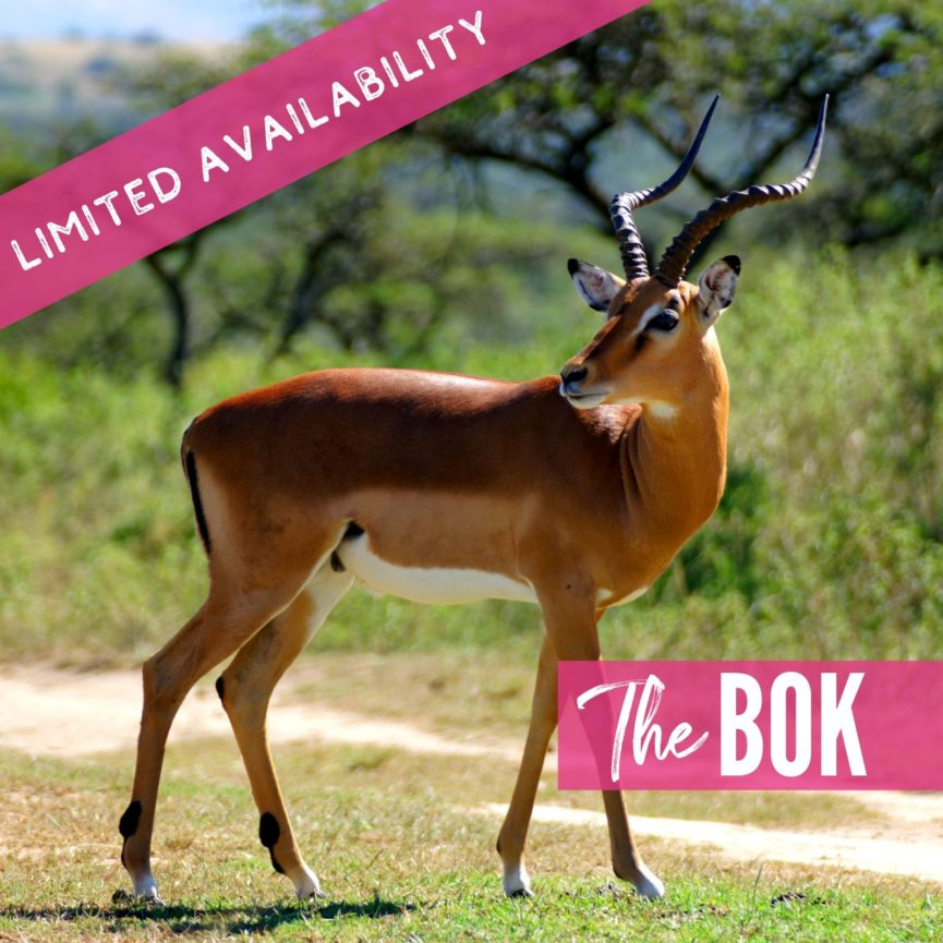 The Bok 2021 Lions package