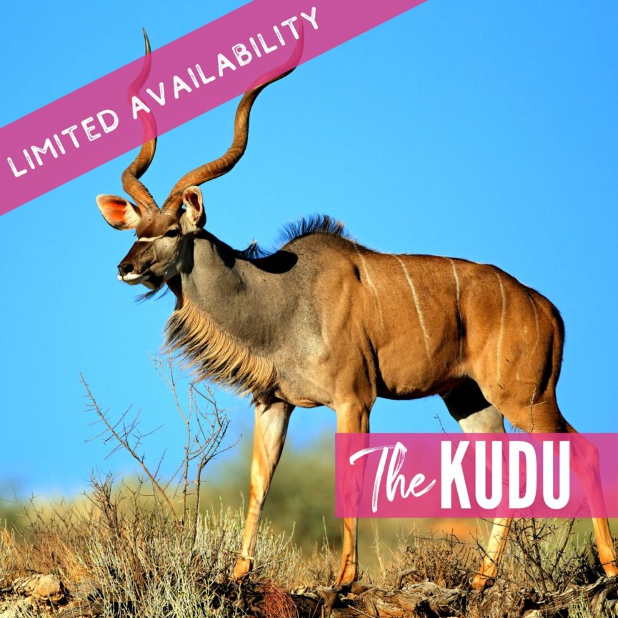 The Kudu 2021 Lions package