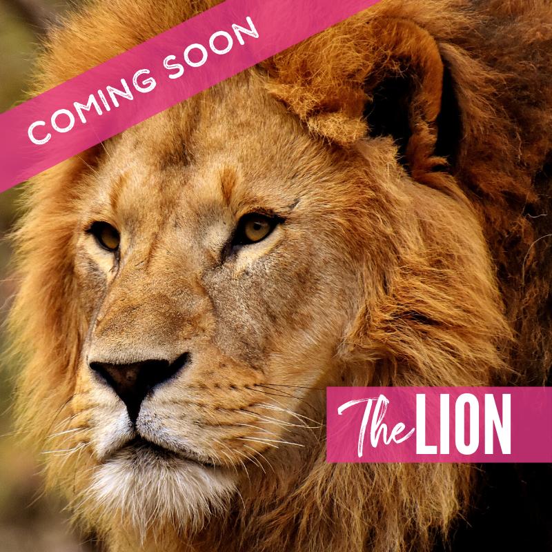 The Lions | Lions 2021