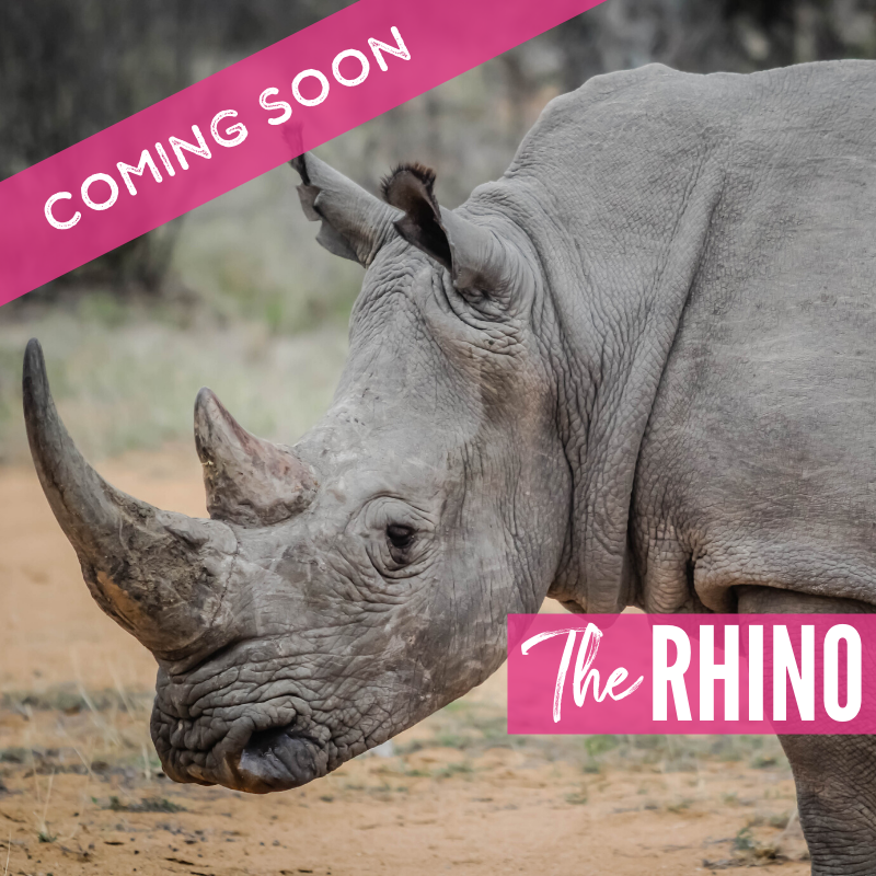 The Rhino 2021 Lions package