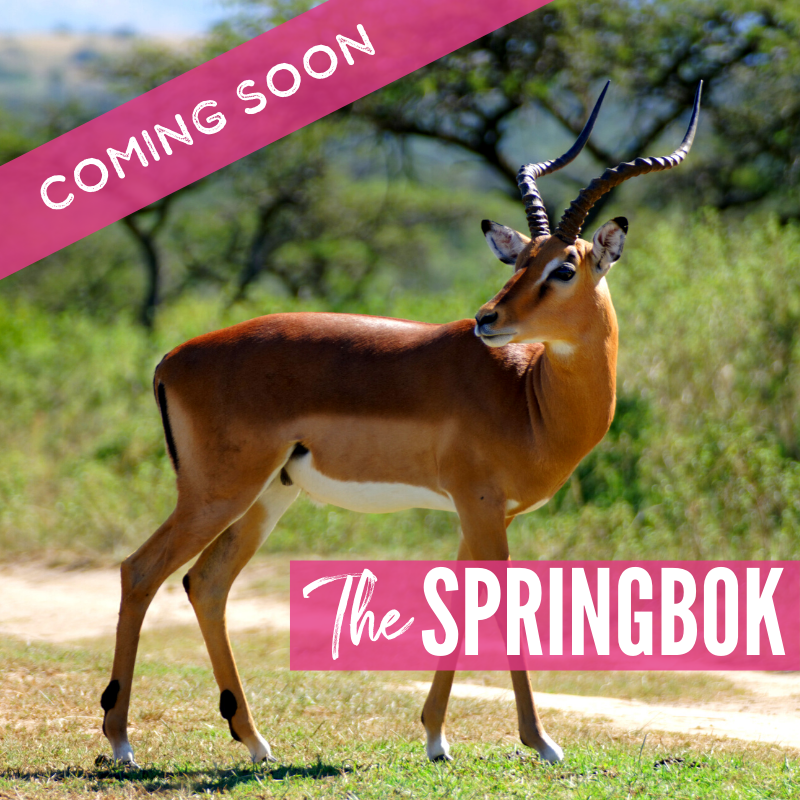The Springbok Lions 2021 Package