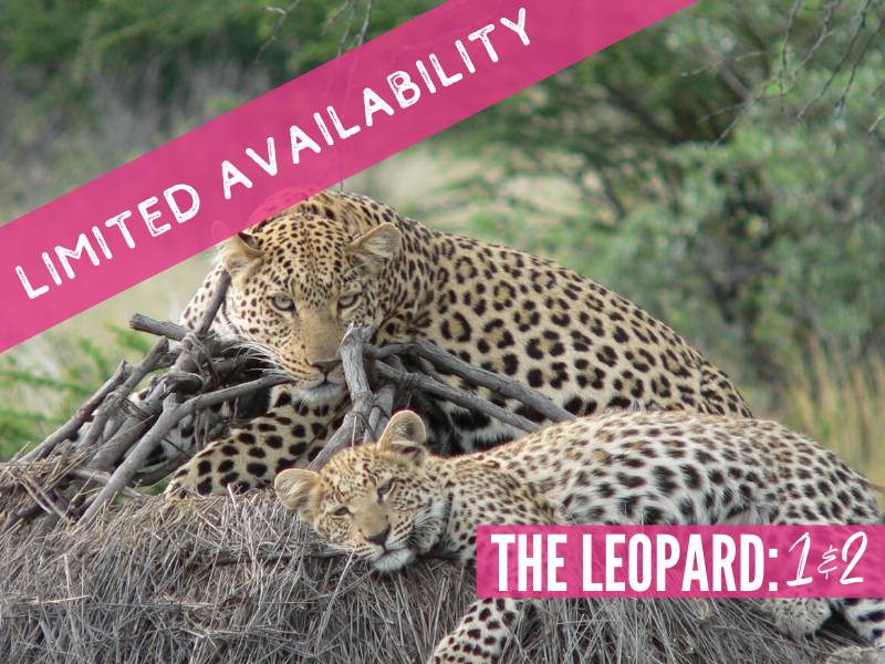 Double Test 1 and 2 The Leopard South Africa package