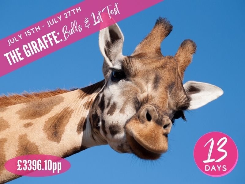 The Giraffe Bulls and 1st Test