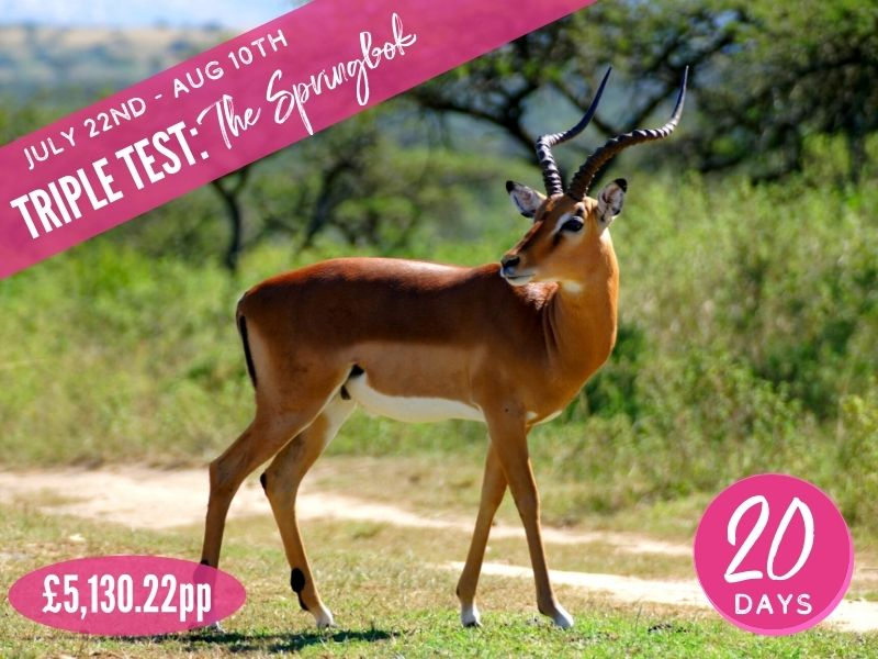 Triple Test: The Springbok Lions 2021 Supporters Package